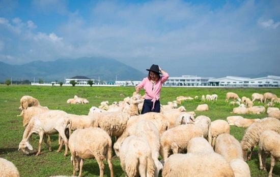 Địa điểm vui chơi gần Vũng Tàu - Cánh đồng cừu