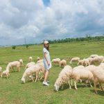 Cánh đồng Cừu ở Vũng Tàu – Điểm đến cuối tuần gần Sài Gòn