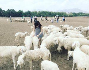 Cánh đồng Cừu 3 - Vũng Tàu - Suối Nghệ