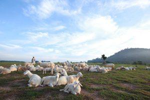 Cánh đồng Cừu - Vũng Tàu - Suối Nghệ